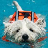 Fluidog! La rubrica dedicata ai cani e all'acqua