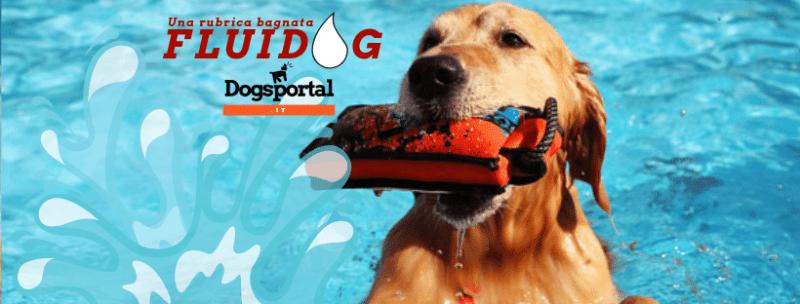 fluidog: la rubrica dedicata a cani e acqua su Dogsportal.it