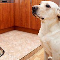 """""""Il mito dell'eccesso di proteine"""" nelle crocchette per cani"""