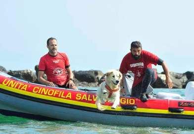 Basi del lavoro in acqua con il cane, stage il 16 giugno