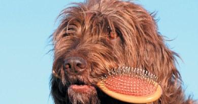 La muta del pelo nel cane, i consigli del toelettatore.