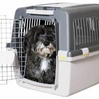 Come scegliere un buon trasportino in base alla taglia del cane?