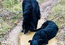 Quando il cane si sporca è un cane felice. Impariamo da lui