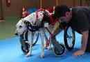 Il veterinario fisiatra e la medicina sportiva veterinaria
