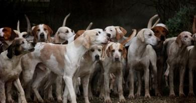 Cane da caccia: se lo adotto in canile