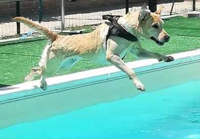 Piscina per cani a Tortona: La collina dei Labrador
