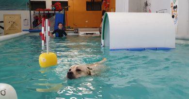 Sport acquatici cinofili: scopriamoli insieme!