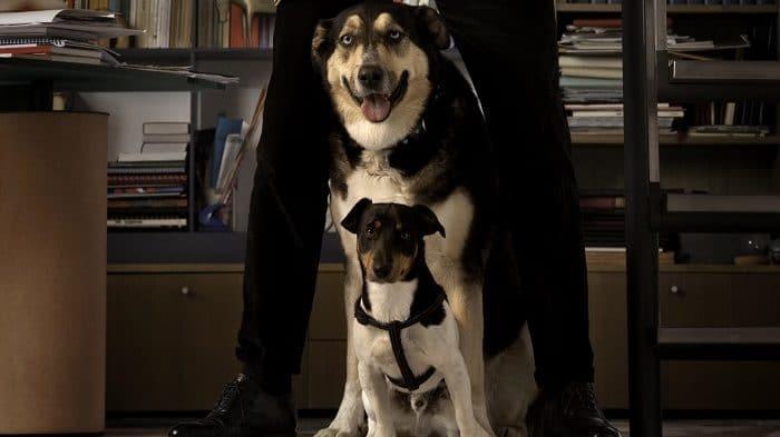 Almo Nature, oggi appartiene alla difesa del cane