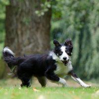 Il cane in estate mangia meno? Il parere del nutrizionista