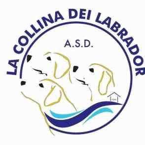 La collina dei Labrador, piscina per cani a Tortona (Alessandria)