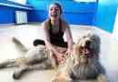 Asilo per cani: ecco le migliori regole
