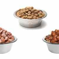 Cibo umido vs cibo secco: qual è il migliore per il cane?