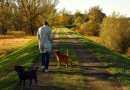 Il cane libero: tra normative e bisogno di libertà