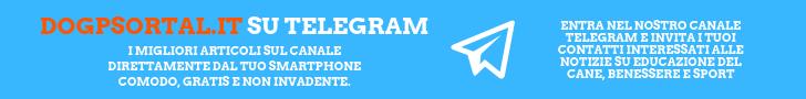 Il canale telegram di Dogsportal.it