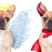 Il cane è buono o cattivo?
