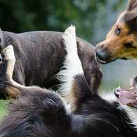 I sentimenti e l'intelligenza del cane: dove sbagliamo?