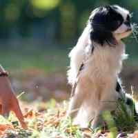 Il cane e il pointing: sbagliando si impara