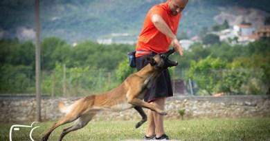 Il cane e il lavoro sul premio