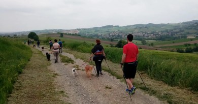 Nordic Walking Dog