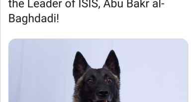 Il Pastore Belga Malinois è il cane antiterrorismo.