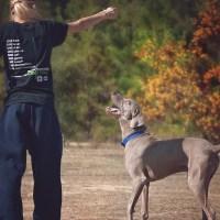 Metodi di addestramento del cane: cosa dice la scienza