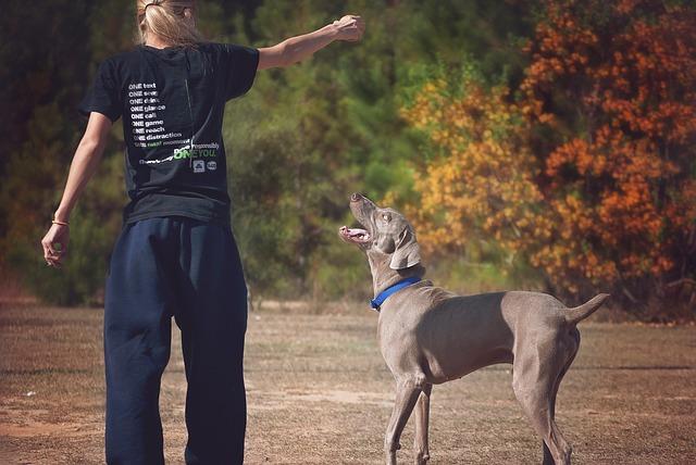 Metodi di addestramento del cane