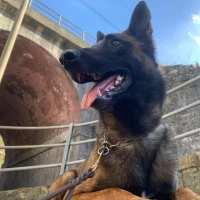 Il cane da detection: ricerca sostanze tra gioco e lavoro