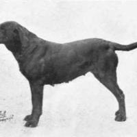 Working dog o cani da lavoro: cani funzionali all'Uomo