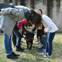 L'istruttore esperto in Pet Therapy, una figura che c'è ma non esiste