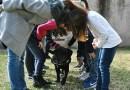 istruttore esperto in Pet Therapy