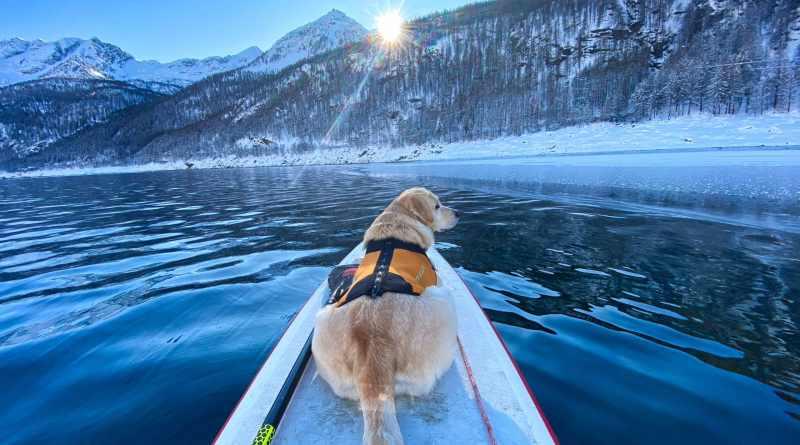 Dogsup invernale