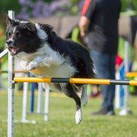 Enci Winner: campionato assoluto di agility