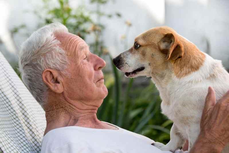 Cani anziani ed effetto positività