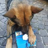 Tarol e Aiko: inseparabili cani antidroga, fino alla fine.