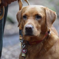 Cognitivismo nei cani da ricerca e soccorso