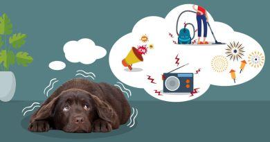 Ansia e impulsività nei cani giovani portano all'ingrigimento prematuro