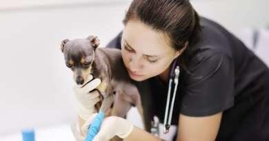 Coronavirus: le attività veterinarie sono essenziali