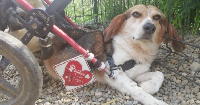 Cani disabili: guida al  montaggio e l'utilizzo