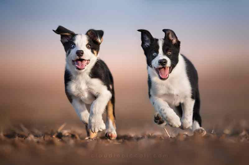 imparare a fotografare i cani