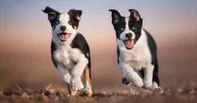 Imparare a fotografare i cani con Claudio Piccoli!