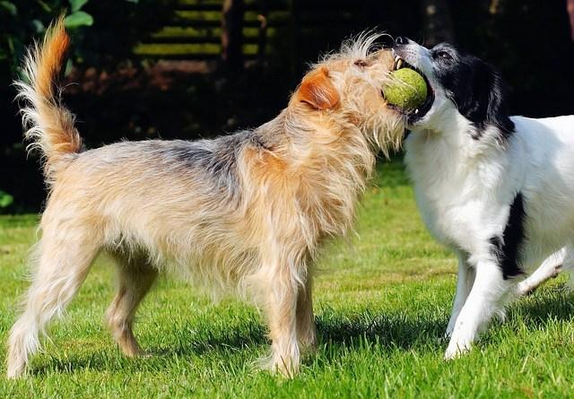 ANPCA denuncia l'illegalità delle pensioni per cani casalinghe: la legge impone l'Autorizzazione Sanitaria