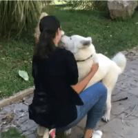 Beirut: Cani e gatti scappati dopo l'esplosione ritrovano le famiglie - VIDEO