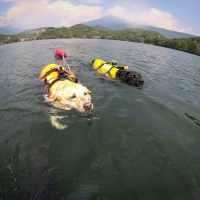 Giubbotto galleggiante per il cane, quando usarlo.