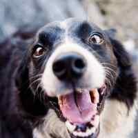 Sul rapporto, la comunicazione, la coercizione e laperformance. Parliamo del Cane.