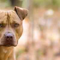 A Milano entra in vigore la lista dei cani speciali: quali sono?