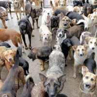 Animal hoarding, accumulare animali: arriva finalmente la prima condanna.