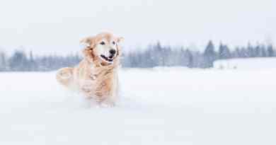 Cani e neve: tutto quello che serve sapere!