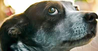 Acepromazina: farmaco da evitare contro ansie e paure del cane