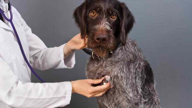 il medico veterinario tra i professionisti degli animali.