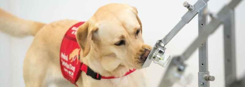 Bio detection dogs